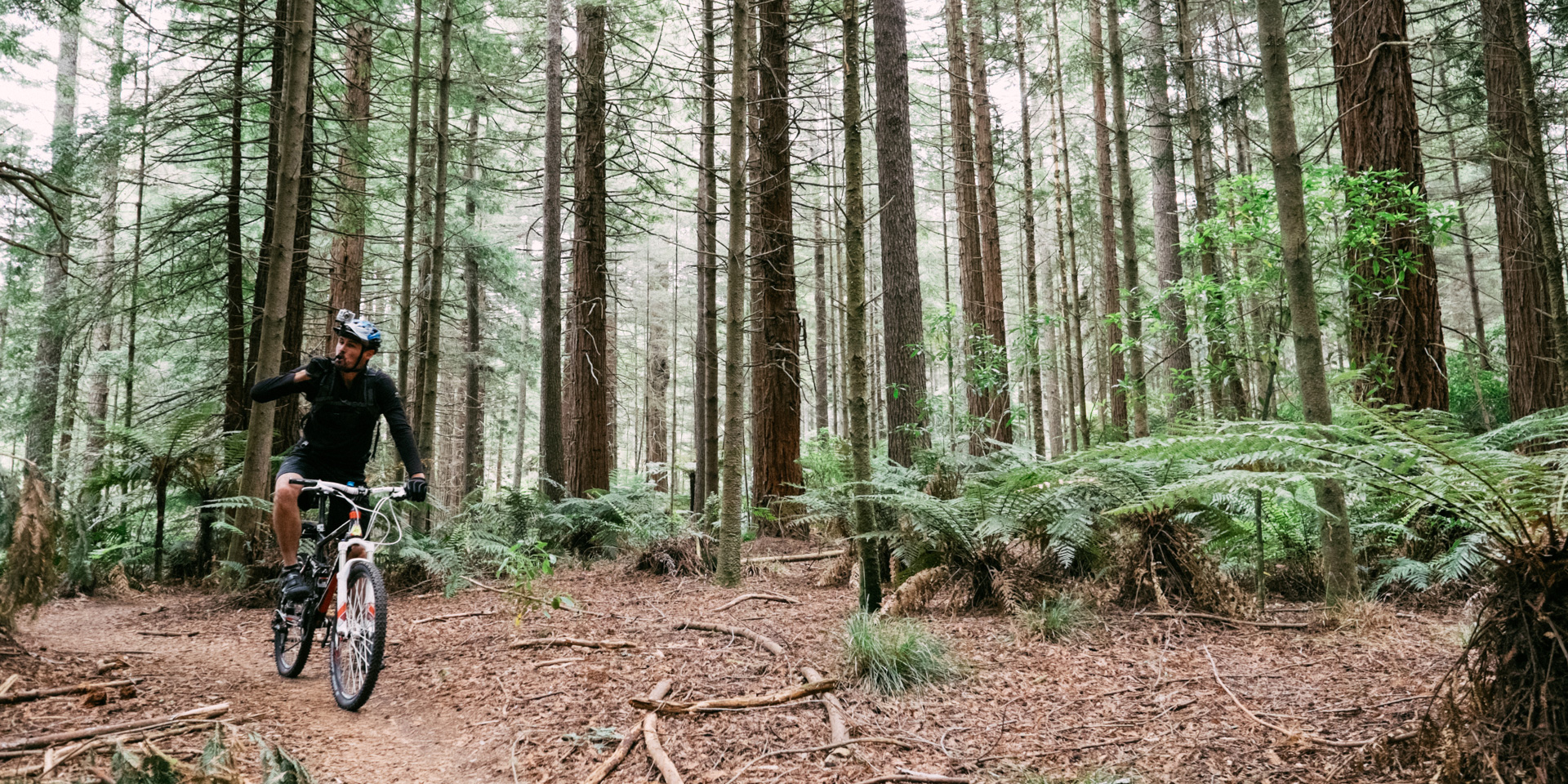 Mountain Biking in The Redwoods, Rotorua
